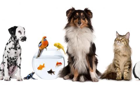 A proteção aos animais