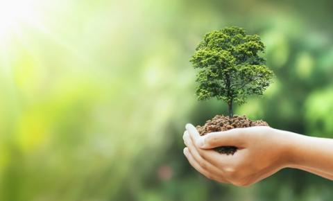 Desinchá assume compromisso de plantar mais de 300 árvores por mês